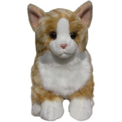 Ginger Cat, gift wrapped, not gift wrapped with or without engraved tag